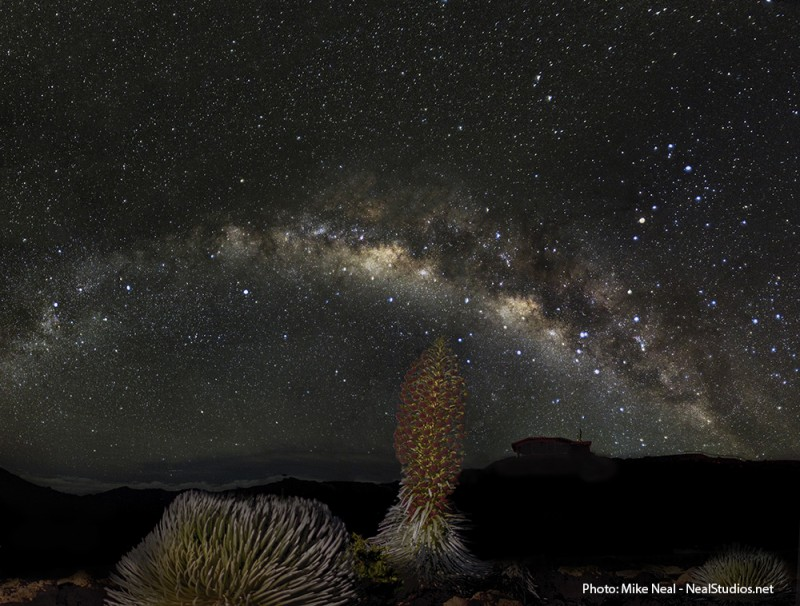 Haleakala Silverswords and the Milky Way - now showing at the top of da rock...